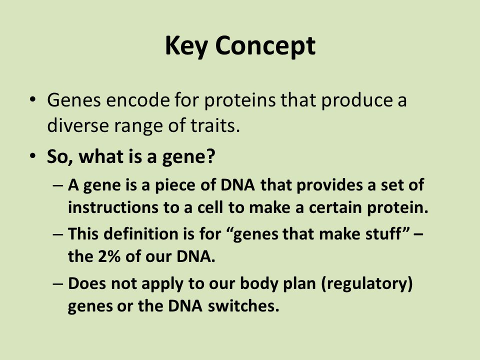 Key Concept Genes encode for proteins that produce a diverse range of traits. So, what is a gene