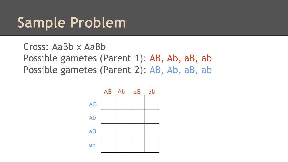 Sample Problem Cross: AaBb x AaBb