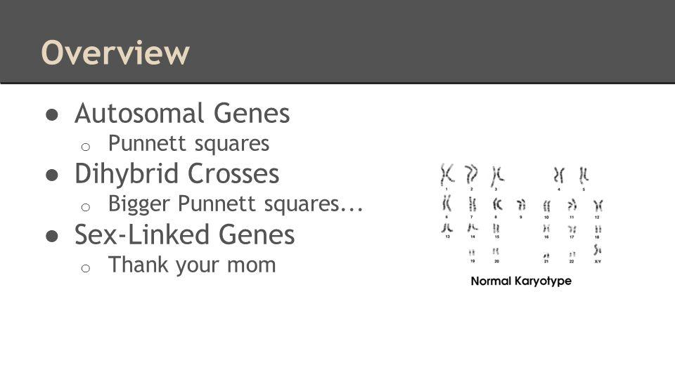 Overview Autosomal Genes Dihybrid Crosses Sex-Linked Genes