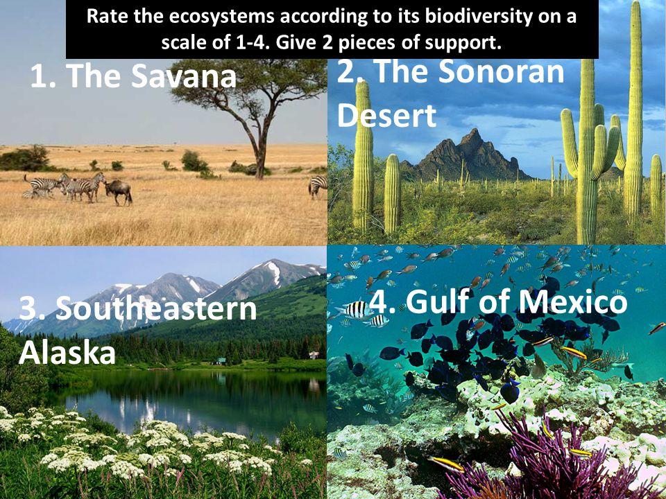 2. The Sonoran Desert 1. The Savana 4. Gulf of Mexico
