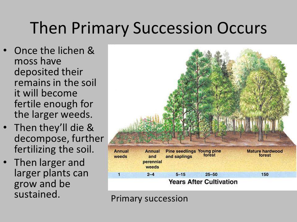 Then Primary Succession Occurs