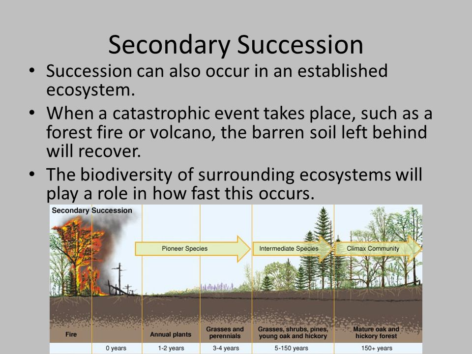 Secondary Succession Succession can also occur in an established ecosystem.