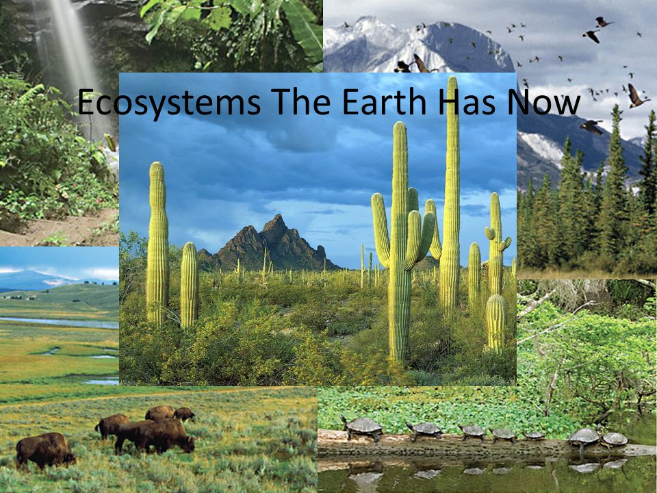 Ecosystems The Earth Has Now