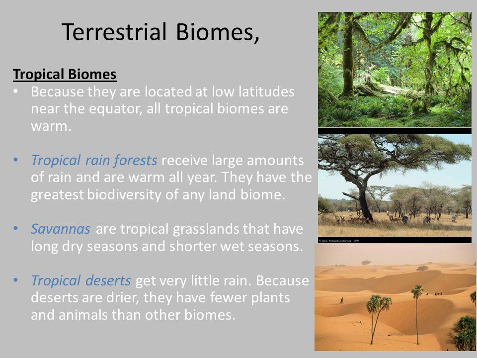Terrestrial Biomes, Tropical Biomes
