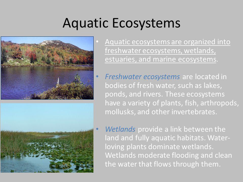 Aquatic Ecosystems Aquatic ecosystems are organized into freshwater ecosystems, wetlands, estuaries, and marine ecosystems.