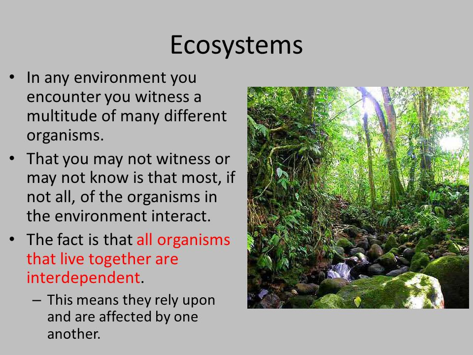 Ecosystems In any environment you encounter you witness a multitude of many different organisms.