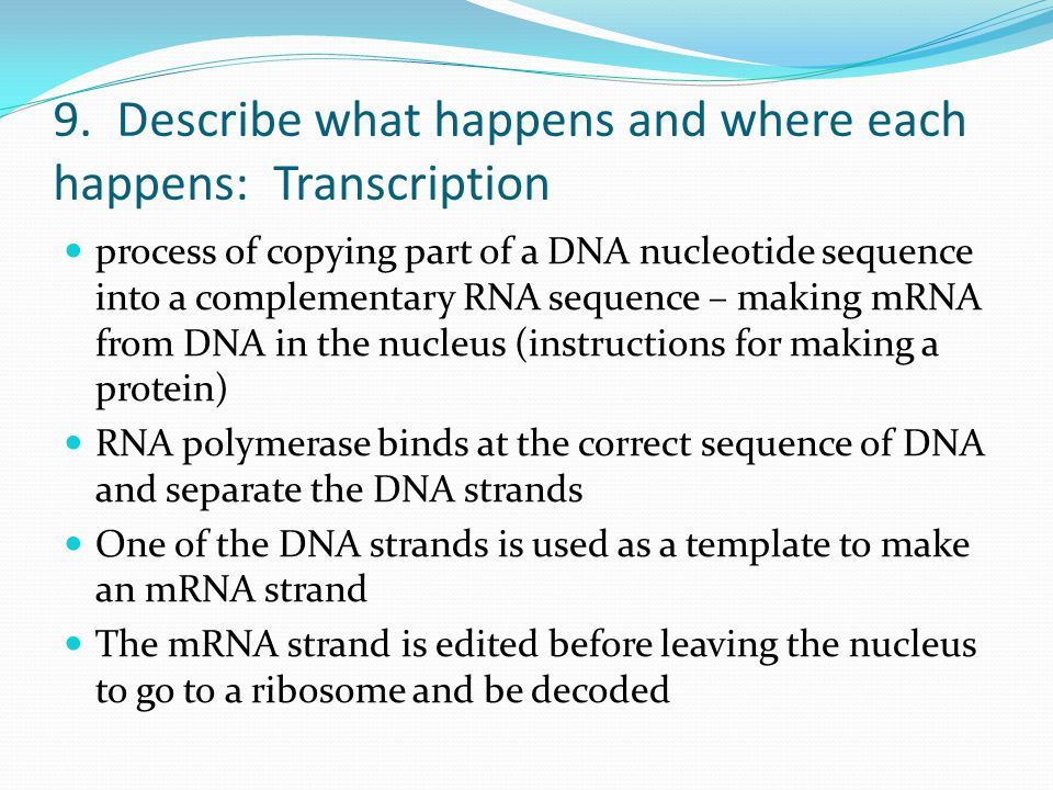 9. Describe what happens and where each happens: Transcription