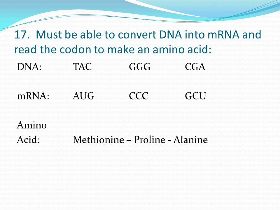 17. Must be able to convert DNA into mRNA and read the codon to make an amino acid: