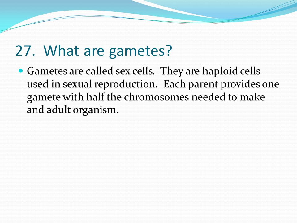 27. What are gametes