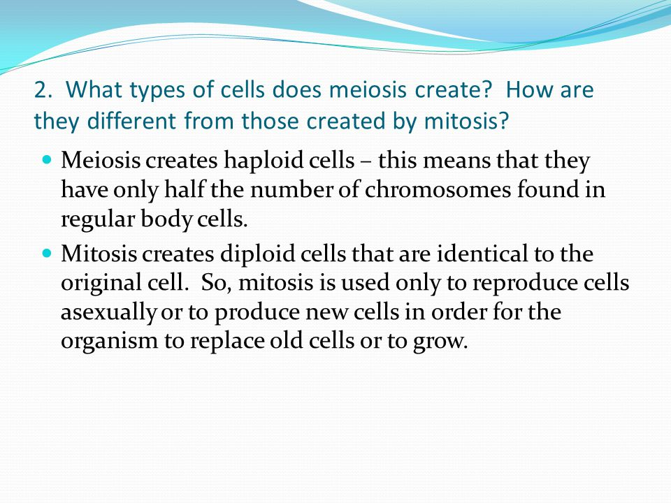 2. What types of cells does meiosis create