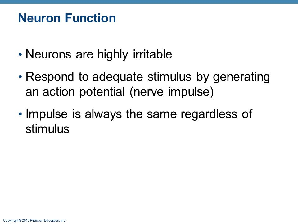 Neuron Function Neurons are highly irritable. Respond to adequate stimulus by generating an action potential (nerve impulse)