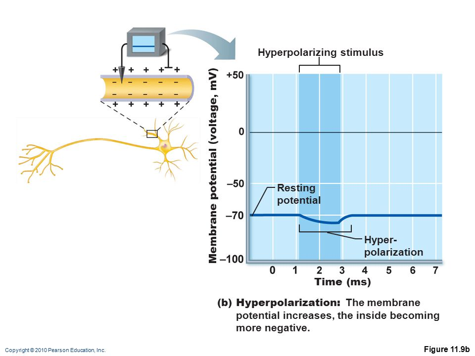 Hyperpolarizing stimulus