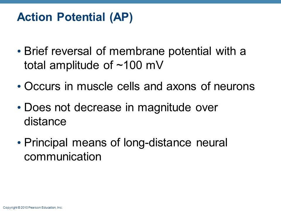 Action Potential (AP) Brief reversal of membrane potential with a total amplitude of ~100 mV. Occurs in muscle cells and axons of neurons.