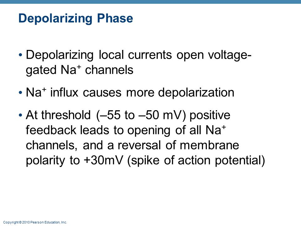 Depolarizing Phase Depolarizing local currents open voltage-gated Na+ channels. Na+ influx causes more depolarization.
