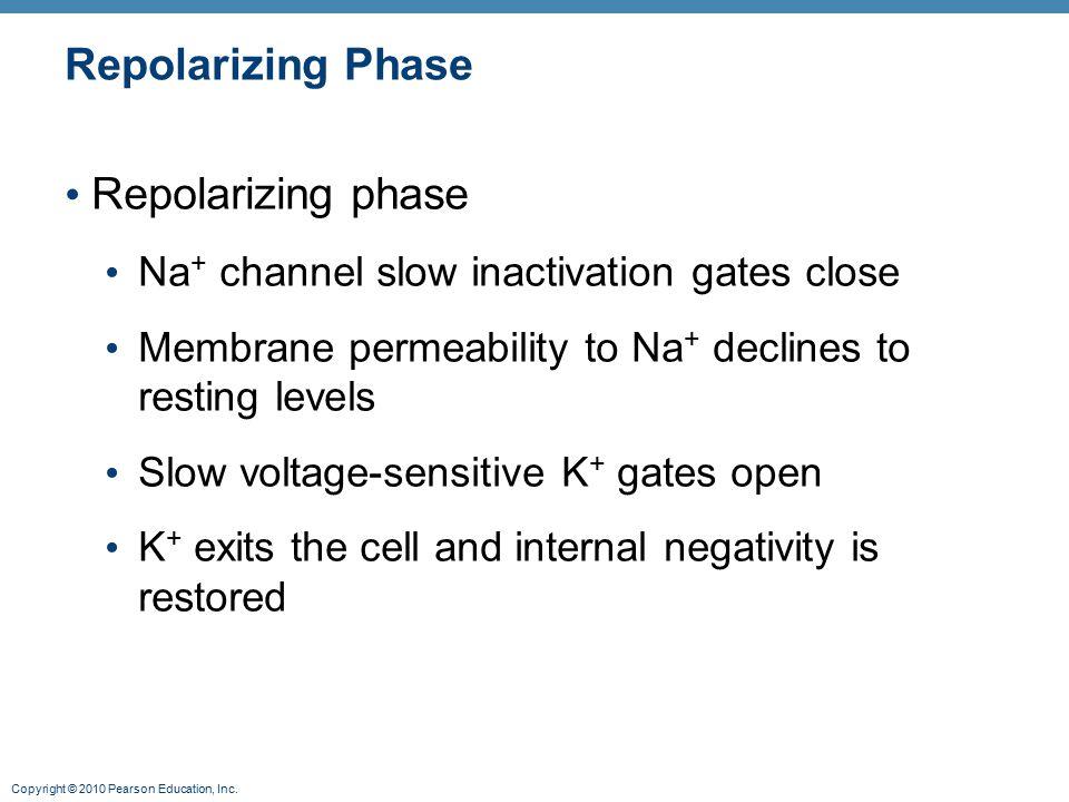Repolarizing Phase Repolarizing phase