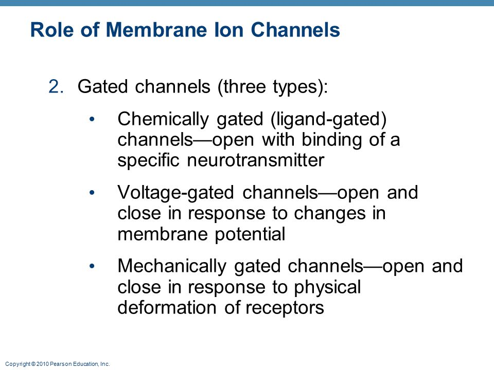 Role of Membrane Ion Channels