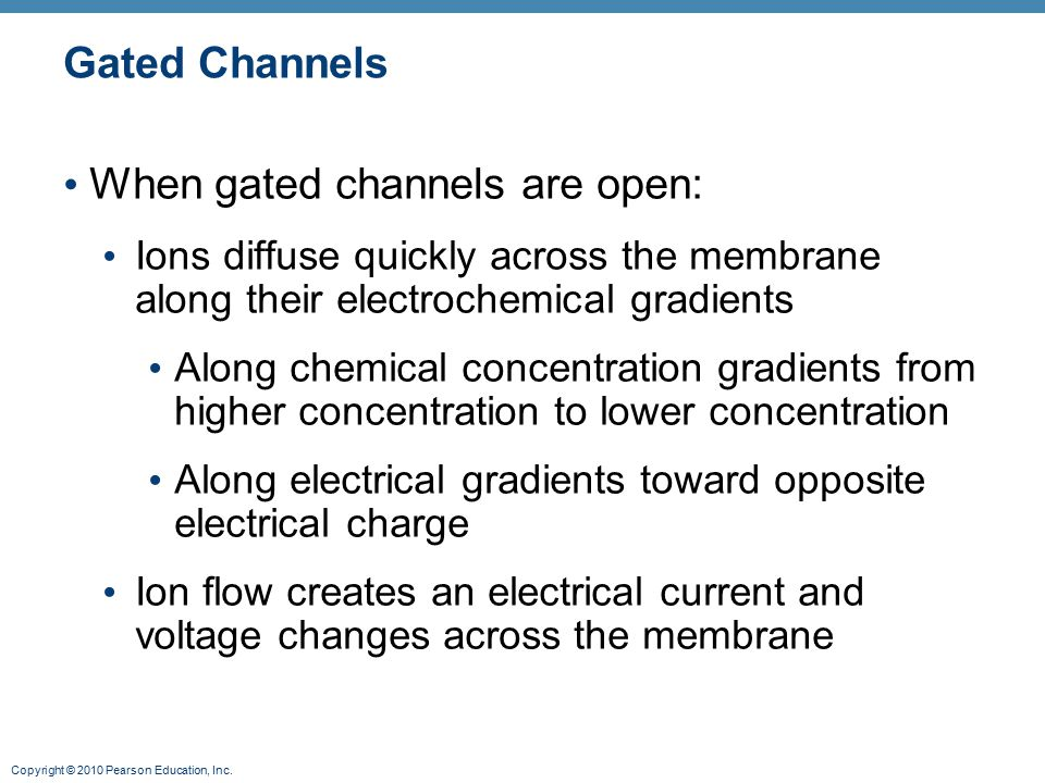 When gated channels are open:
