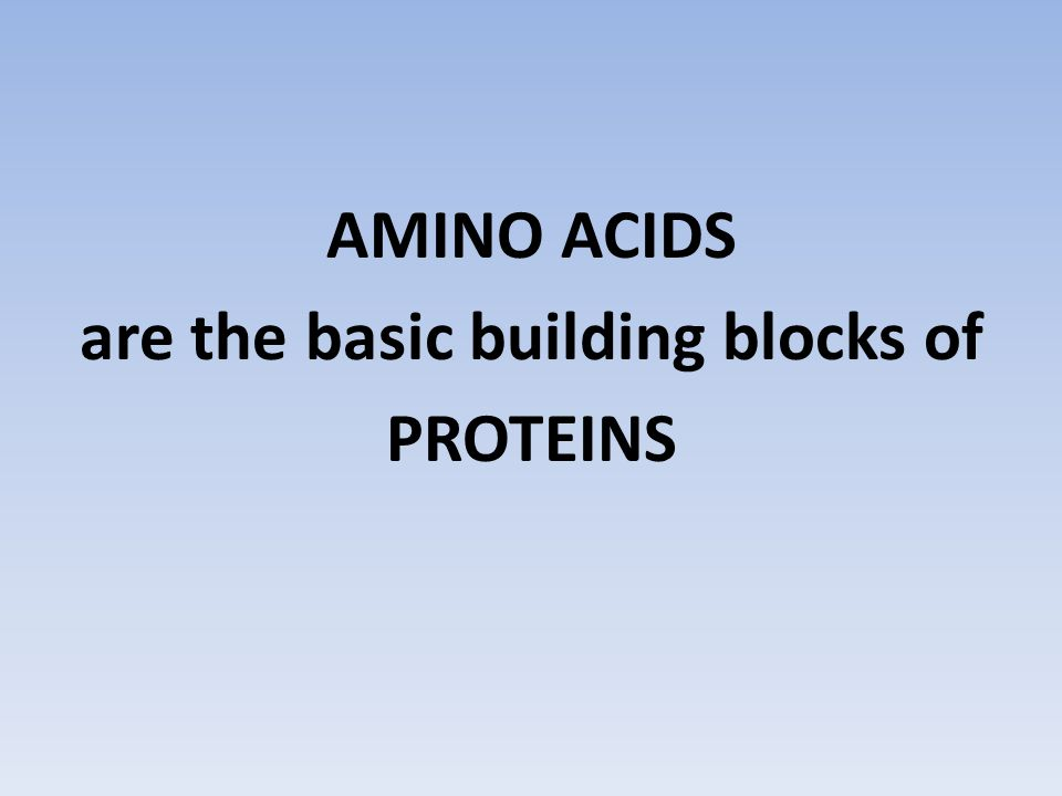 AMINO ACIDS are the basic building blocks of PROTEINS
