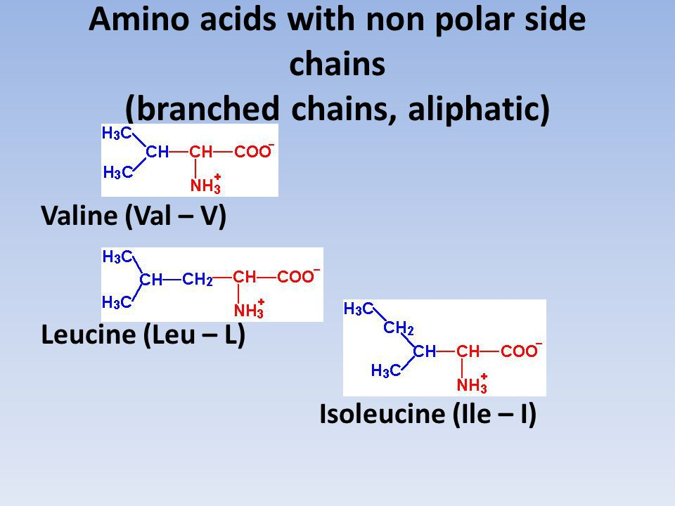 Amino acids with non polar side chains (branched chains, aliphatic)