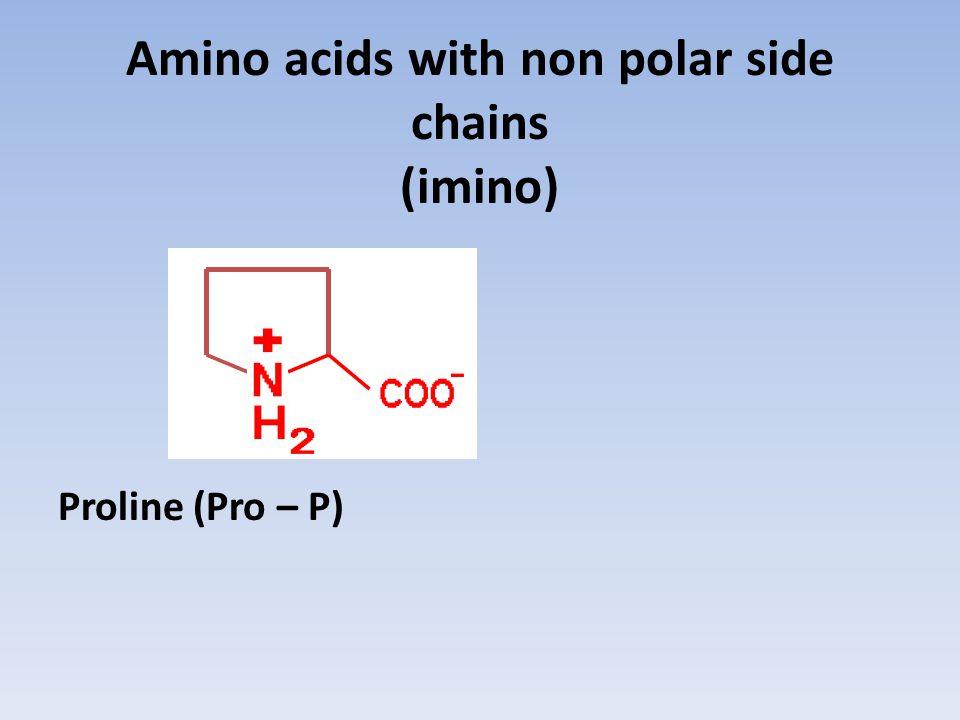 Amino acids with non polar side chains (imino)