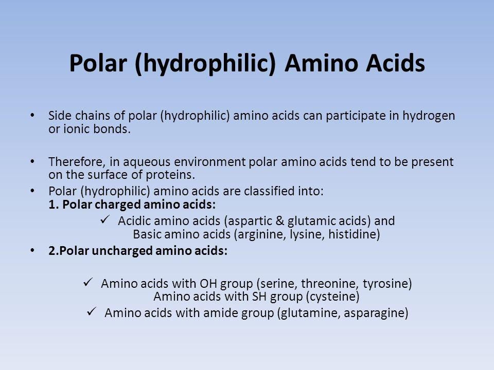 Polar (hydrophilic) Amino Acids
