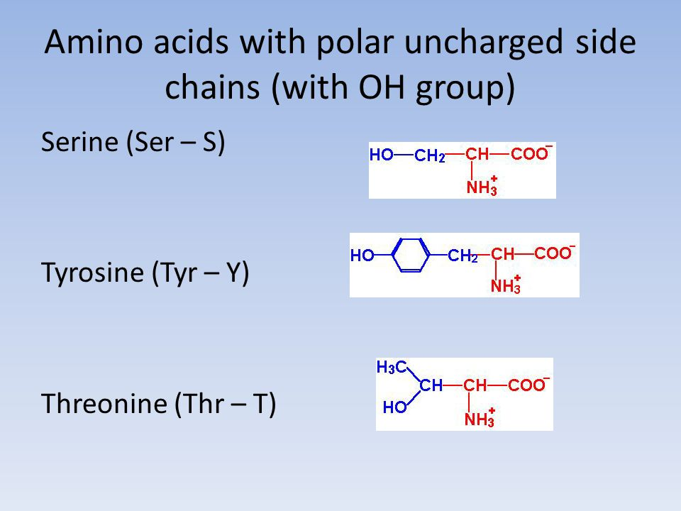 Amino acids with polar uncharged side chains (with OH group)