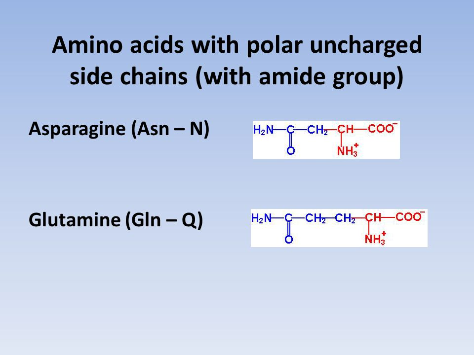 Amino acids with polar uncharged side chains (with amide group)
