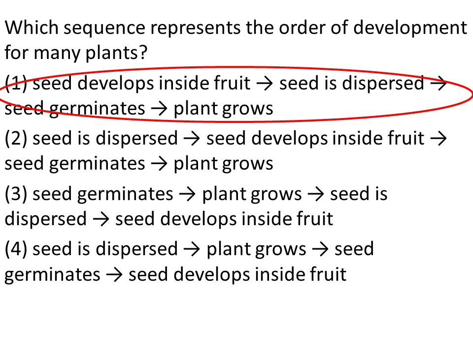Which sequence represents the order of development for many plants
