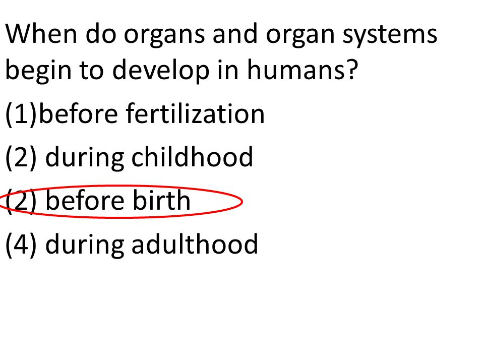 When do organs and organ systems begin to develop in humans