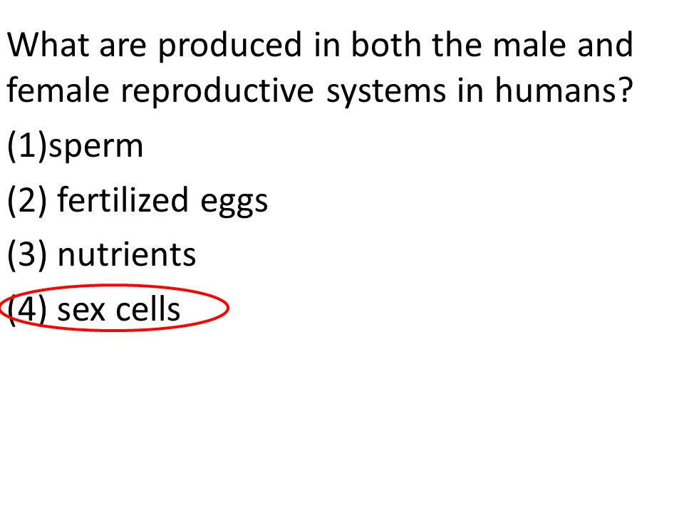 What are produced in both the male and female reproductive systems in humans