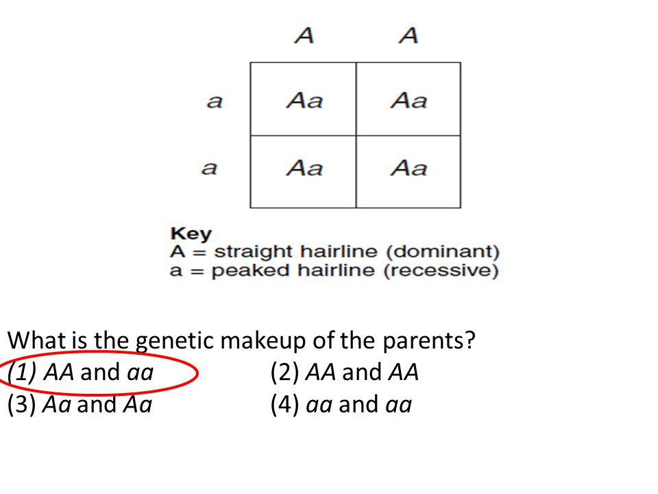 What is the genetic makeup of the parents