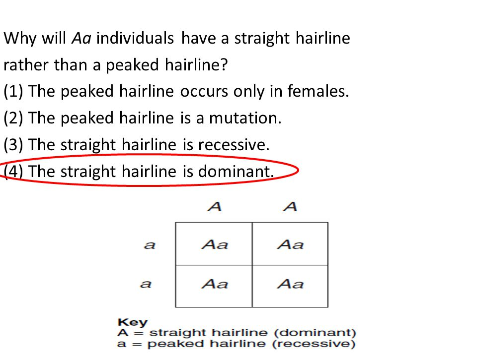Why will Aa individuals have a straight hairline rather than a peaked hairline.