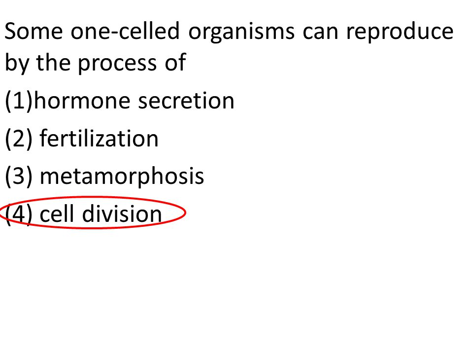 Some one-celled organisms can reproduce by the process of