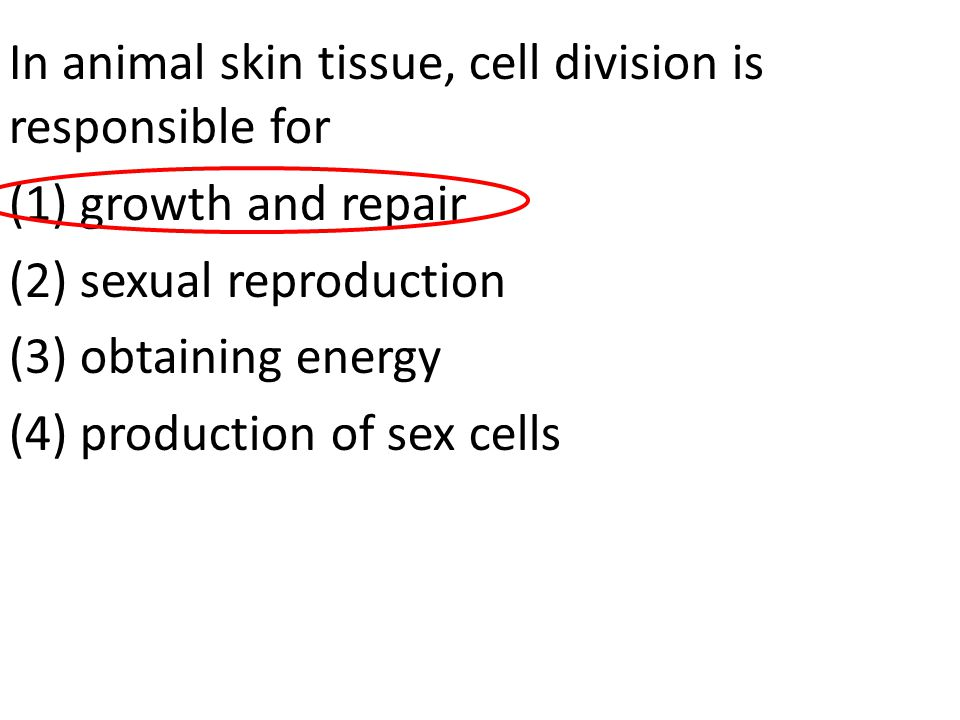 In animal skin tissue, cell division is responsible for (1) growth and repair (2) sexual reproduction (3) obtaining energy (4) production of sex cells