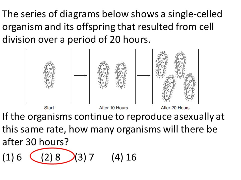 The series of diagrams below shows a single-celled organism and its offspring that resulted from cell division over a period of 20 hours.