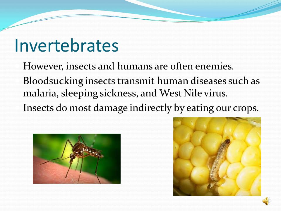 Invertebrates However, insects and humans are often enemies.
