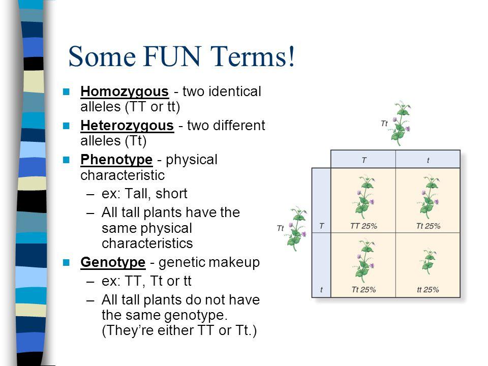 Some FUN Terms! Homozygous - two identical alleles (TT or tt)