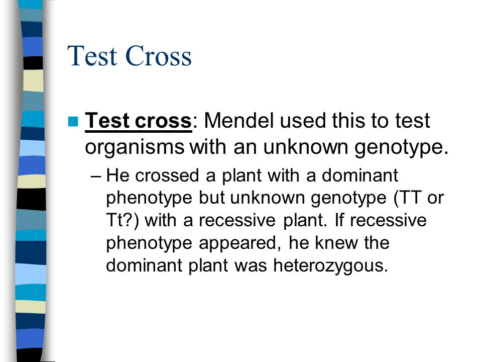 Test Cross Test cross: Mendel used this to test organisms with an unknown genotype.