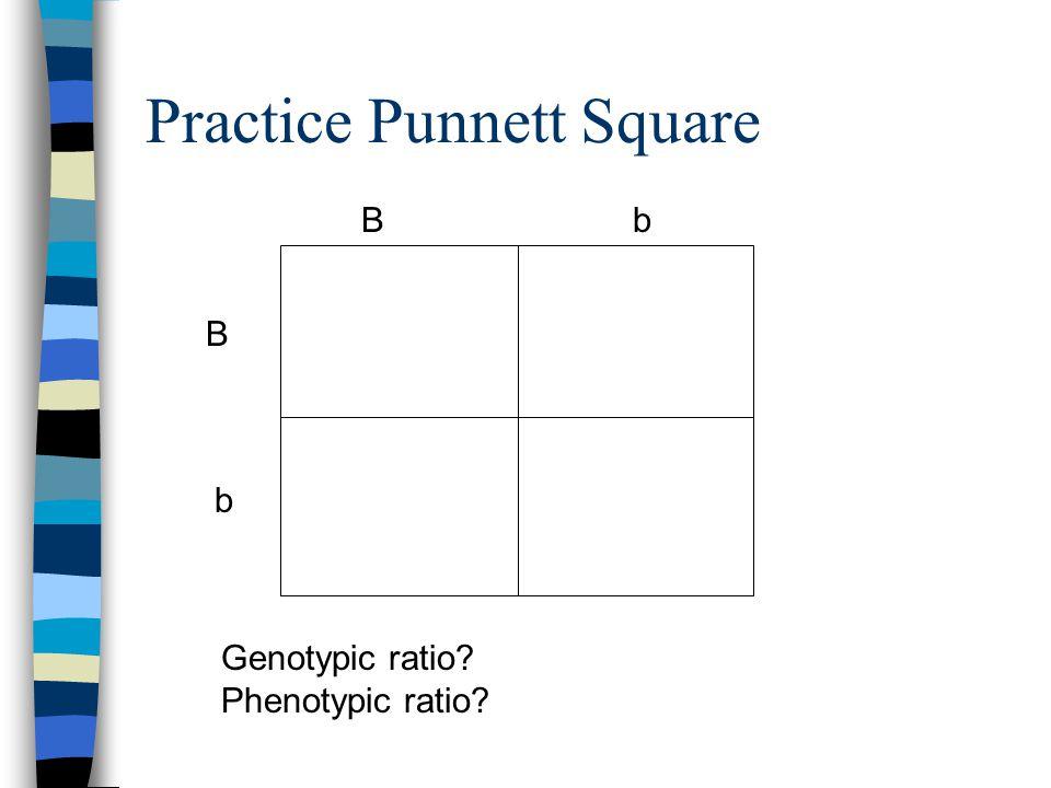 Practice Punnett Square