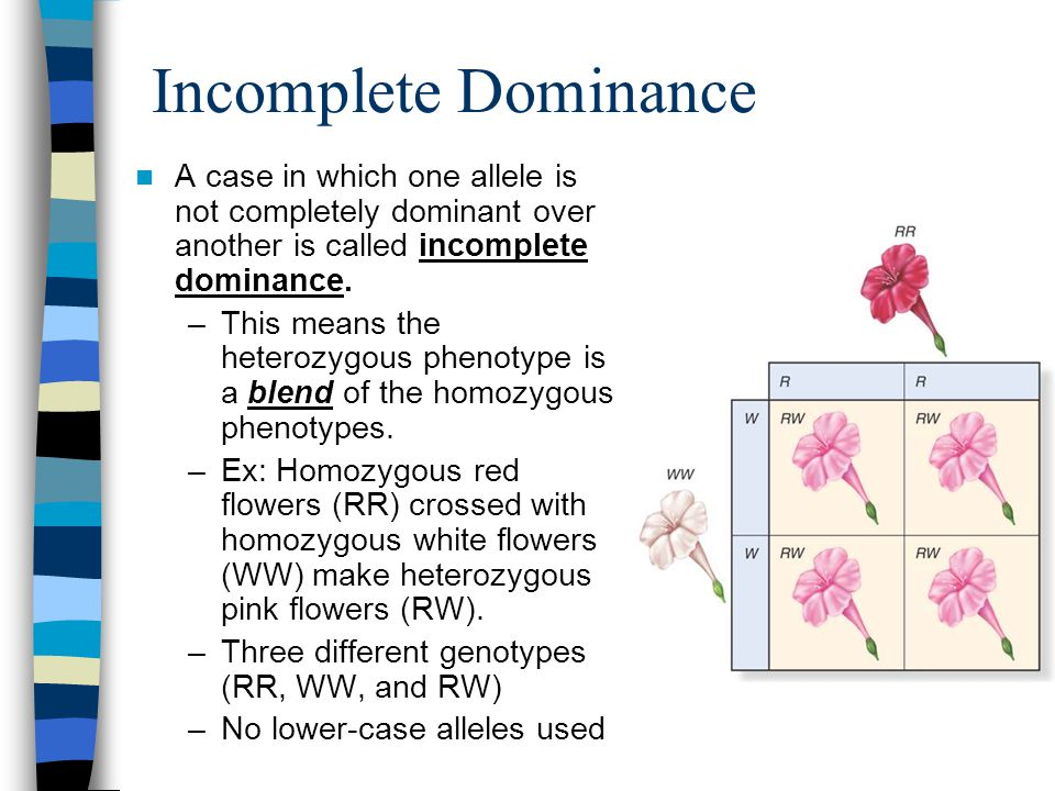 Incomplete Dominance A case in which one allele is not completely dominant over another is called incomplete dominance.