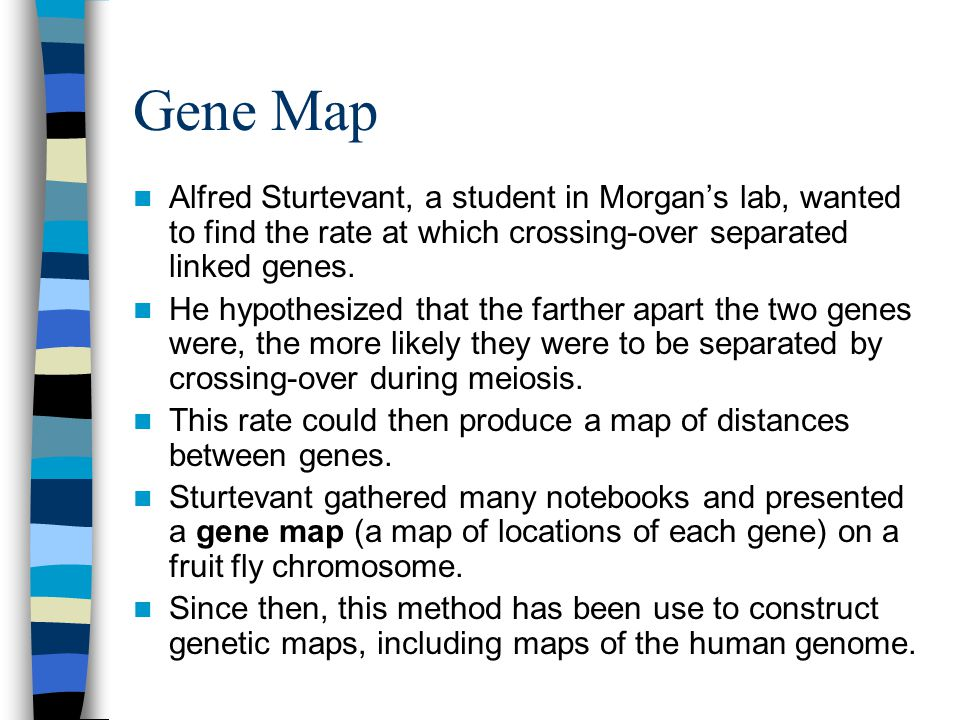 Gene Map Alfred Sturtevant, a student in Morgan's lab, wanted to find the rate at which crossing-over separated linked genes.