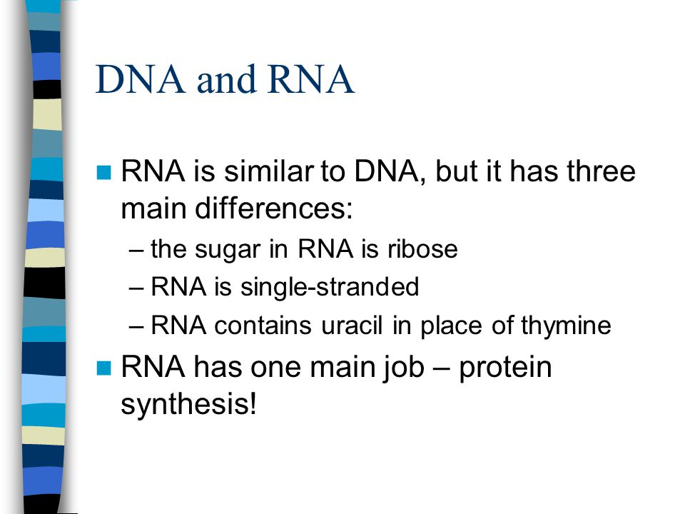 DNA and RNA RNA is similar to DNA, but it has three main differences: