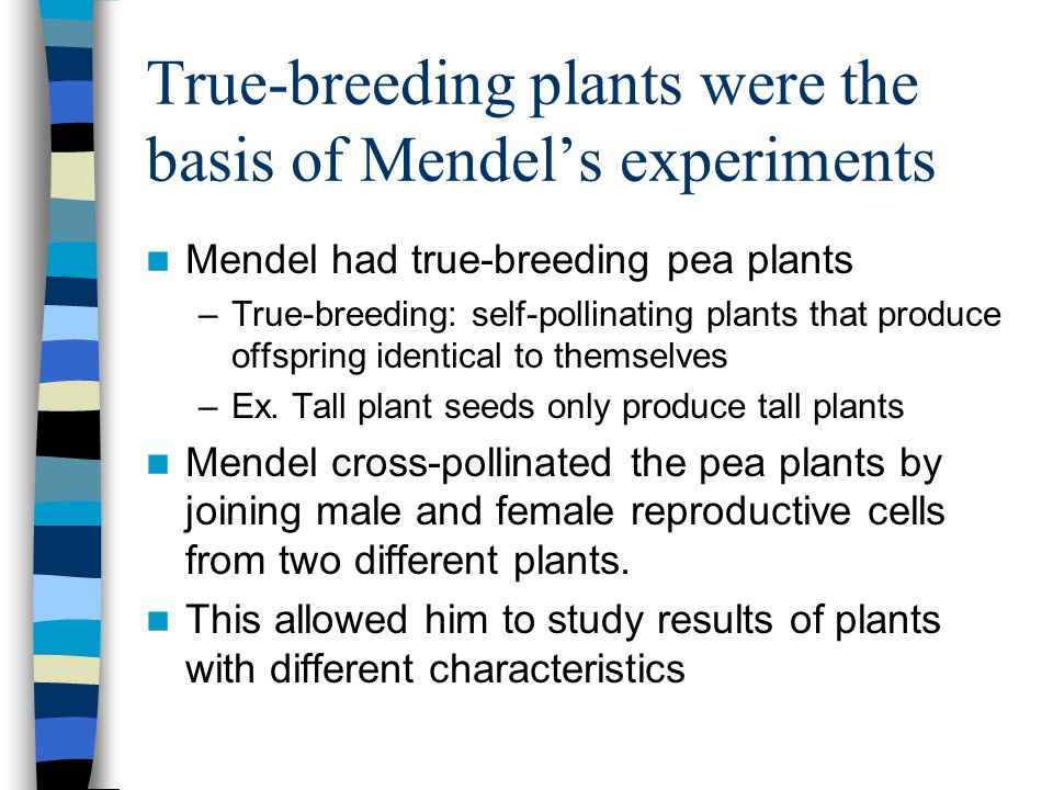 True-breeding plants were the basis of Mendel's experiments
