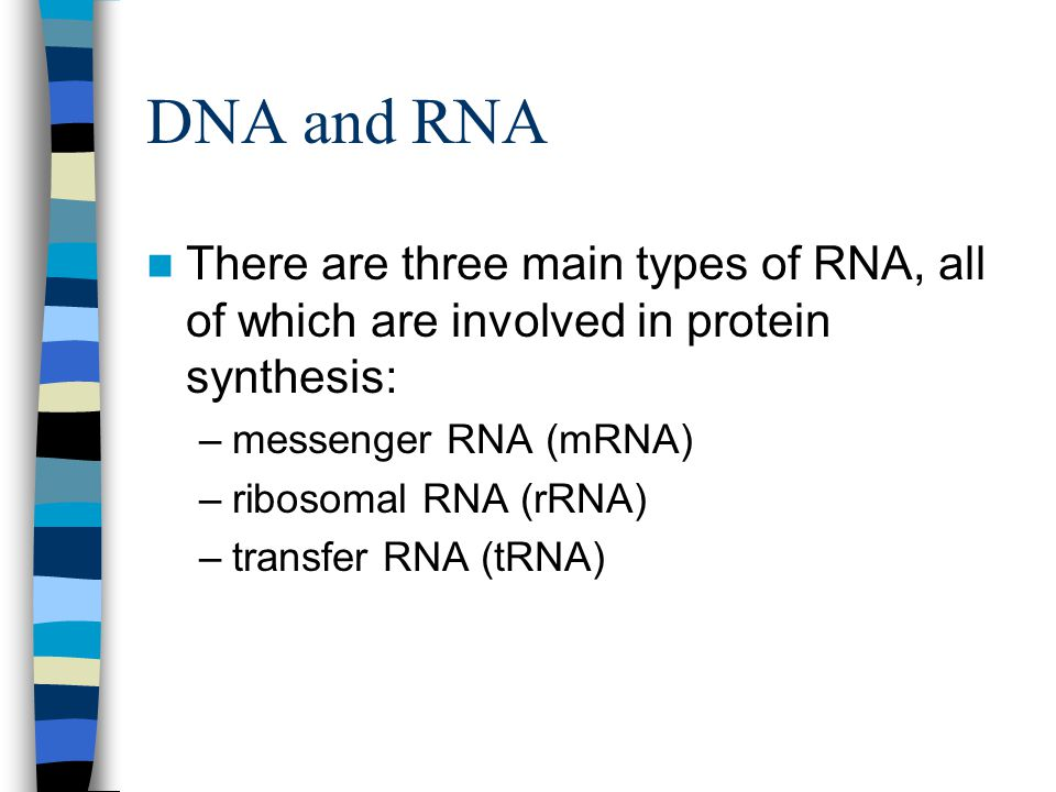 DNA and RNA There are three main types of RNA, all of which are involved in protein synthesis: messenger RNA (mRNA)