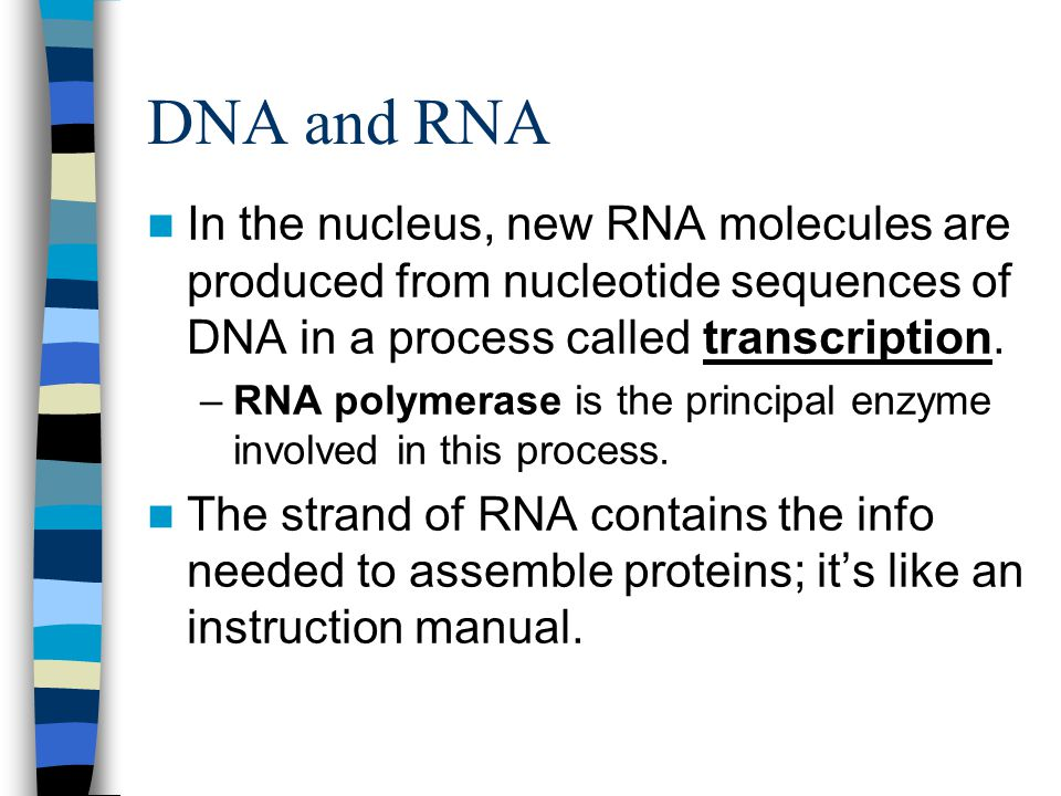 DNA and RNA In the nucleus, new RNA molecules are produced from nucleotide sequences of DNA in a process called transcription.