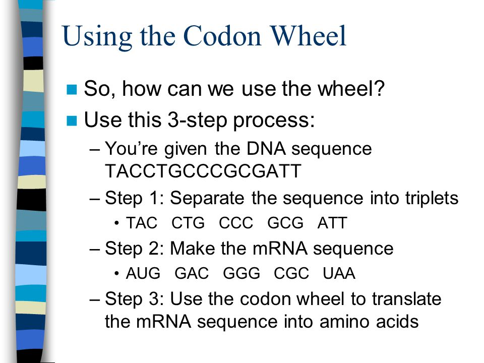 Using the Codon Wheel So, how can we use the wheel