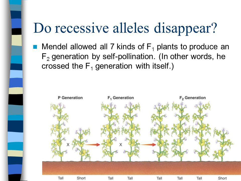 Do recessive alleles disappear