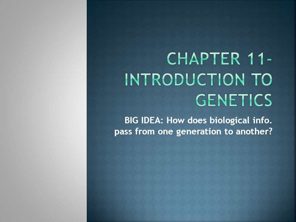 Chapter 11- Introduction to Genetics