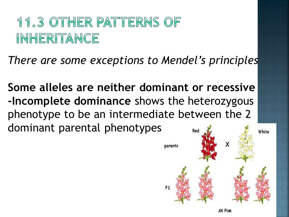 11.3 Other Patterns of inheritance