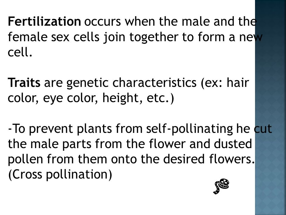 Fertilization occurs when the male and the female sex cells join together to form a new cell.